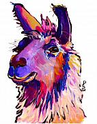 Peruvian Llama Prints - Fabio Print by Pat Saunders-White            