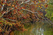 West Fork Photo Framed Prints - Fall along West Fork River Framed Print by Thomas R Fletcher