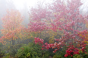 Autumn Scene Photos - Fall Color and Fog by Thomas R Fletcher