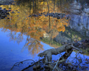 Fall Color At Big Bluff Print by Michael Dougherty