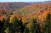 Randolph County Prints - Fall Color West Virginia Print by Thomas R Fletcher