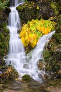 Autumn Foliage Photos - Fall Colors In Crystal Springs Falls by Craig Tuttle