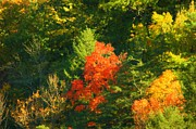 Fall Colors Print by Kathleen Struckle