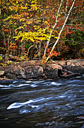 Autumn Leaf Posters - Fall forest and river landscape Poster by Elena Elisseeva
