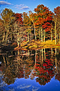 Golden October Posters - Fall forest reflections Poster by Elena Elisseeva