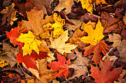 Fallen Leaves Posters - Fall leaves background Poster by Elena Elisseeva