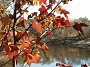 Theresa Willingham Prints - Fall on the Withlacoochee River Print by Theresa Willingham