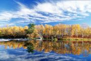 Autumn Foliage Prints - Fall Trees And Whiteshell River Print by Dave Reede
