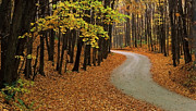 Fall Photographs Posters - Fall Winding Road  Poster by John  Bartosik