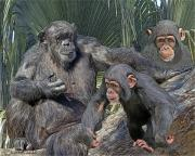Chimpanzee Digital Art Prints - Family Portrait Print by Larry Linton