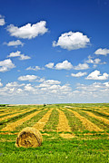 Bale Metal Prints - Farm field at harvest in Saskatchewan Metal Print by Elena Elisseeva