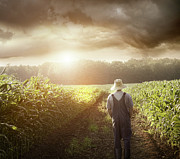 Natural Storm Posters - Farmer walking in corn fields at sunset Poster by Sandra Cunningham