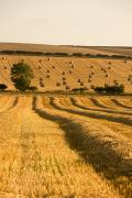 North Yorkshire Prints - Farmers Field, North Yorkshire, England Print by John Short