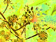 False Mixed Media Prints - Fatsia Japonica Print by Barbara Moignard