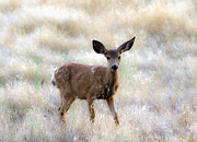 Blending Photos - Fawn by Steve McKinzie