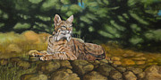 Bobcats Metal Prints - Felicity Metal Print by Jennifer Calicchio