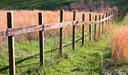 Unfinished Prints - Fence Perspective Print by Kristin Elmquist