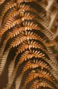 Hairy Stem Prints - Fern Abstract Print by Ron Dahlquist - Printscapes