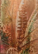 Atc Originals - Fern by John Vandebrooke