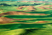 Wheatfields Photo Prints - Field of Green Print by Eggers   Photography