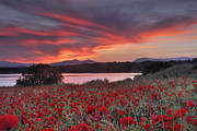 Field Of Poppies Print by Guido Montanes Castillo