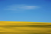 Blurred Motion Photos - Field of sunflowers by Bernard Jaubert