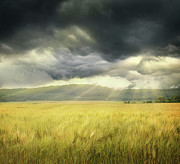 Agricultural Framed Prints - Field of wheat with ominous clouds  Framed Print by Sandra Cunningham