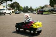 Michael Ledray Photography Photos - Fifi goes for a ride by Michael Ledray