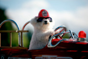 Michael Ledray Photography Photos - Fifi the Fire Dog by Michael Ledray