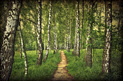 Birch Photos - Find Your Way Back Home by Evelina Kremsdorf