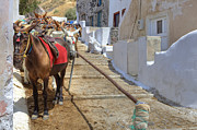 Donkey Photo Metal Prints - Fira - Santorini Metal Print by Joana Kruse