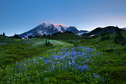 Mt. Rainier Photos - First Light by Mike  Dawson