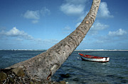 Fishing Boat And Palm Trunk Print by Thomas R Fletcher