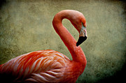 Birds Mixed Media Prints - Flamingo Print by Angela Doelling AD DESIGN Photo and PhotoArt