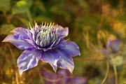 Purple Flower Photos - Floating In The Garden by Rebecca Cozart