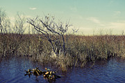 Miami River Photos - Florida Everglades 8 by Madeline Ellis