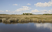 Sabal Framed Prints - Florida Salt Marsh Framed Print by John Arnaldi