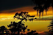 Spanish Moss Photos - Florida sunset by David Lee Thompson