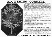 Flower Gardening Prints - Flower Advertisement, 1890 Print by Granger