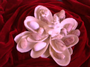 Caribbean Pyrography Prints - Flower Shell Print by Arlin Jules