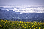 Mountain Scene Prints - Flowers and Mountains...Warm and Cool Print by Rob Travis