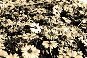 Flora Prints - Flowers In Sepia Tone Print by Sumit Mehndiratta
