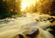 Autumn Leaf Posters - Flowing Water In Rushing River Poster by Dave Reede
