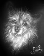 Dog Tapestries - Textiles Acrylic Prints - Fluffy Acrylic Print by Julia Lazaridi