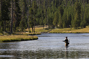 Fly Fisherman Posters - Fly Fishing in the Firehole River Yellowstone Poster by Dustin K Ryan