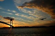 Mark Gilman - Flying By The Verrazano Bridge 2