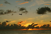 Susan Mcnamara Metal Prints - Flying Into The Sunset Metal Print by Susan McNamara