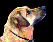 Retriever Digital Art - Focus by Dorrie Pelzer