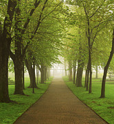 Green Leaves Photos - Foggy park by Elena Elisseeva