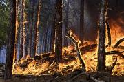 Custer State Park Prints - Forest Fire Caused By Lightning Print by Mark Thiessen